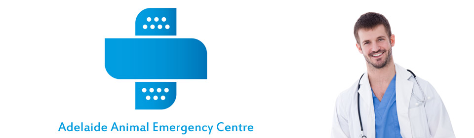 Adelaide Animal Emergency Centre
