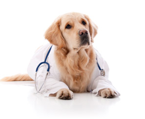 Dog in labcoat